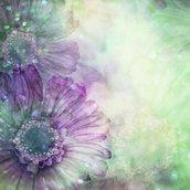 Gerber flower Wallpaper