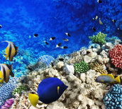 Tropical fish in the sea wallpaper