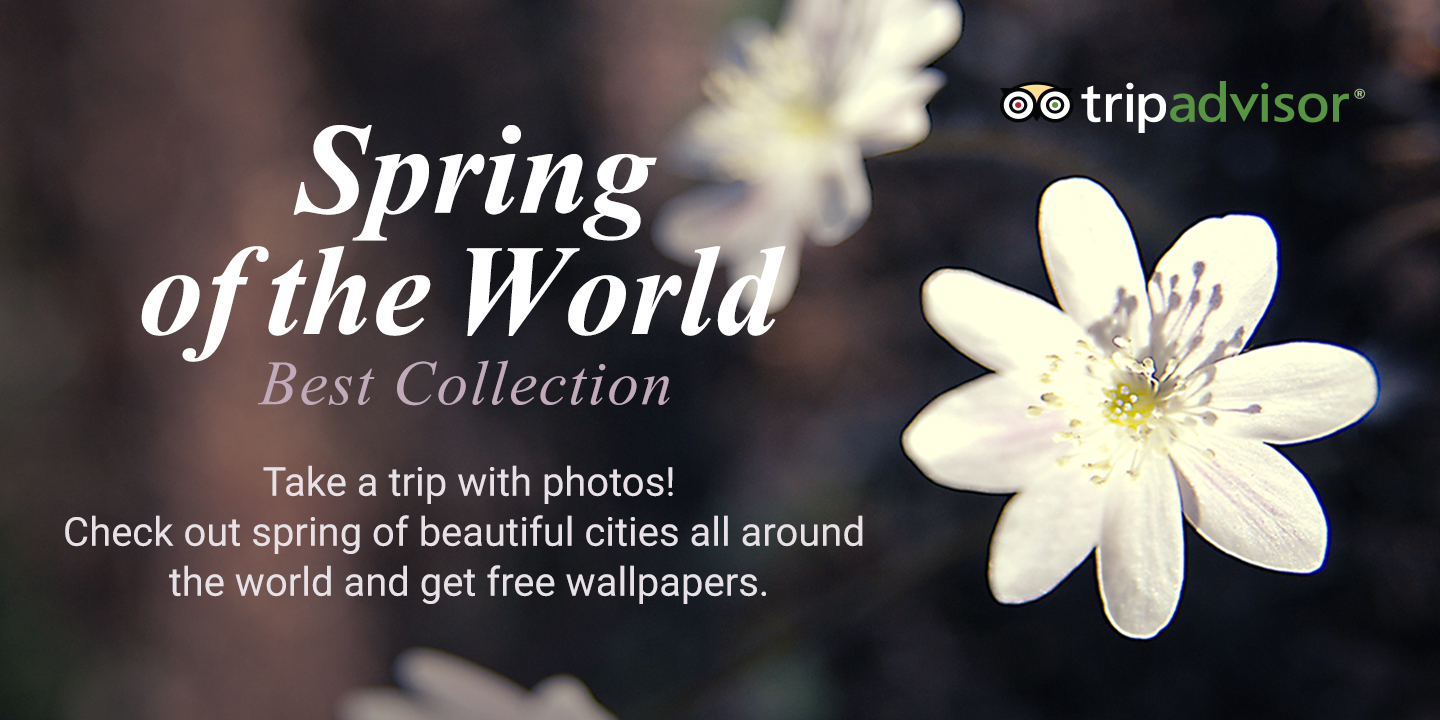 [Tripadvisor 2 - Spring of the World Best Collection]